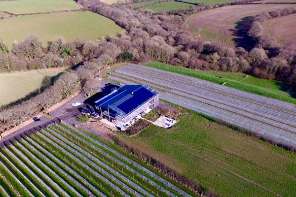 Trevibban Mill Cornish Vineyard Amp Orchards About Us